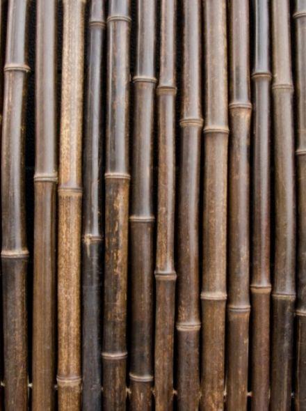 Bamboescherm Beijing 180 x 180 cm Zwart