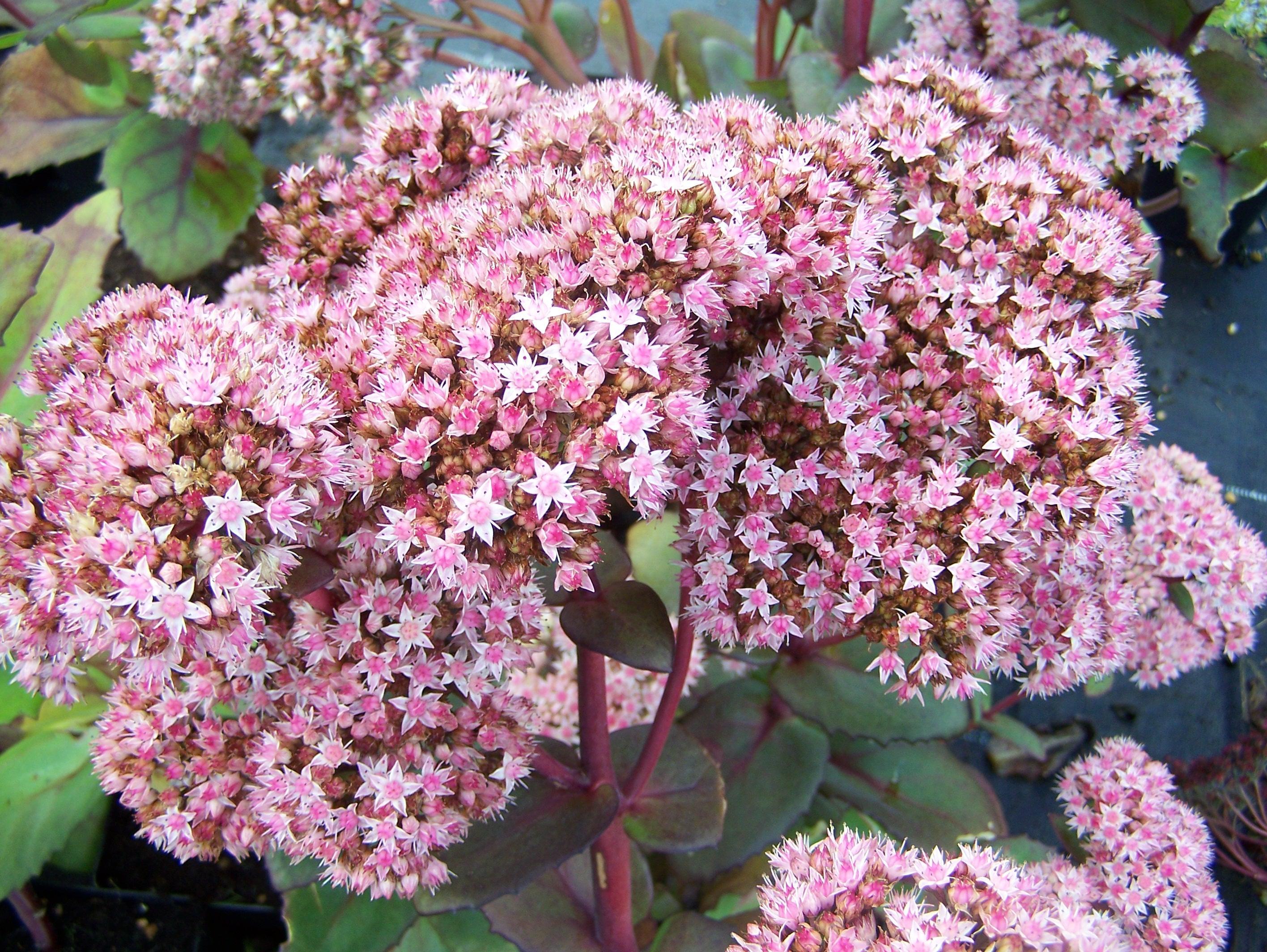 Wonderlijk Onderhoudsvriendelijke plantenborder | De Tuinen van Appeltern DN-46