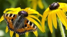 Vlinder plantenborder