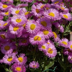 Pastelkleuren plantenborder