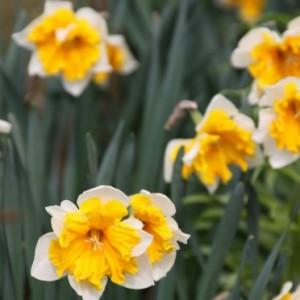 Tuintips voor april