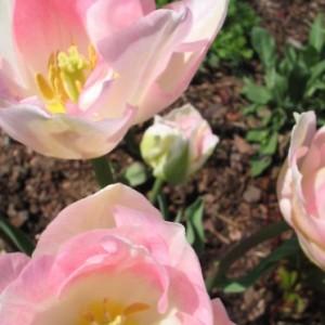 Tuintips voor maart