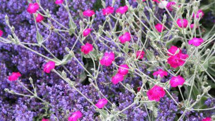 Offerte Tuinplanten