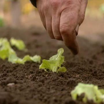 Bemesting voor de groentetuin