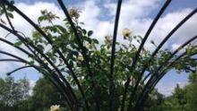Klimplantenrekken, pergola's