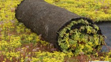 Ekogras dakbegroeiing