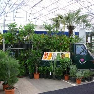 Exotische en tropische planten