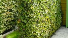 Een geluidswerende tuinafscheiding
