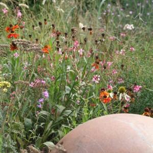 De prairieborder, een feest voor vaste planten liefhebbers!