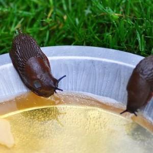 Slakken in mijn tuin, wat kan ik doen?