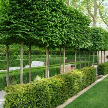 Vormbomen als ruggengraat van jouw tuin