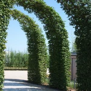 Vormbomen als ruggengraat van uw tuin