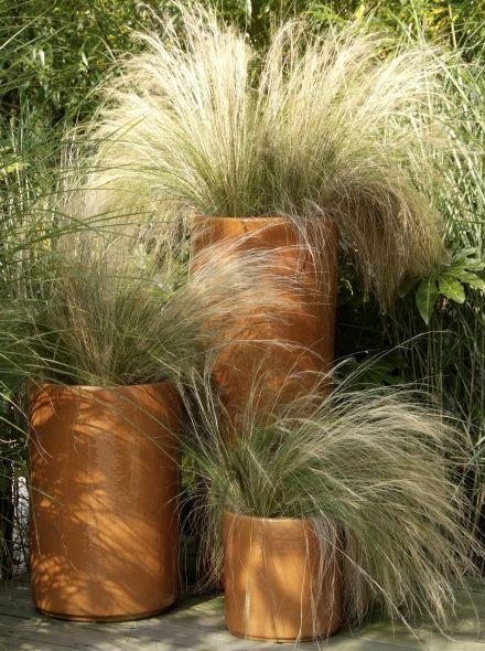 Stipa tenuifolia (Vedergras)