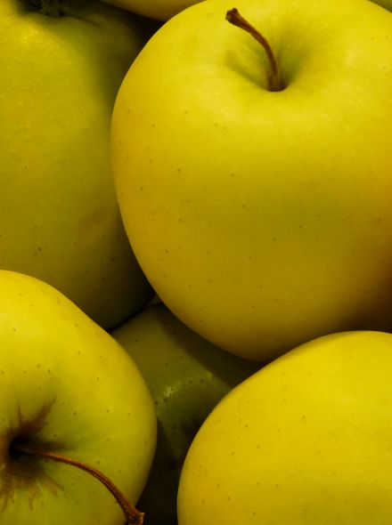 Appelboom Golden Delicious (Golden Delicious appel, halfstam in pot)