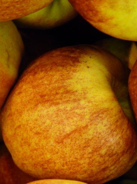 Appelboom Janogold (Jonagold appel, halfstam)