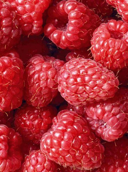 Rubus idaeus 'Malling Promise' (Framboos 'Malling Promise', Zomerframboos)