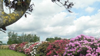 Bouwen met Rhododendrons
