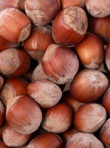 Corylus avellana 'Cosford' (Hazelnoot, Hazelaar) - struik in container