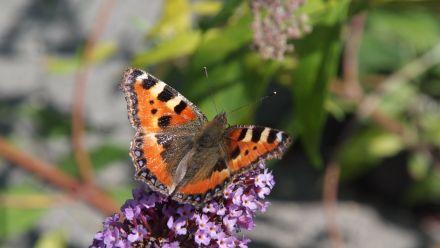 Borderpakketten voor vlindertuinen