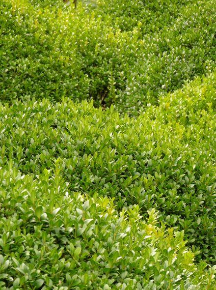 Minimalistische border groen - groengeel (21,6 m2)