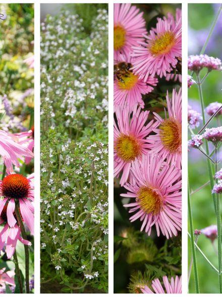Vlinderborder paars en roze (9 m2)