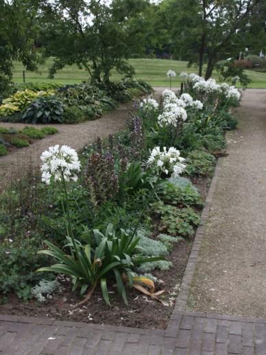Agapanthus 'White Heaven' - Afrikaanse lelie, Kaapse lelie, liefdesbloem
