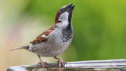Vogeldrinkbak - Vogeldrinkschaal