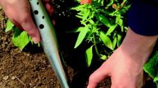 Jonge planten uitzaaien en planten