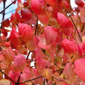 Tuintips voor oktober