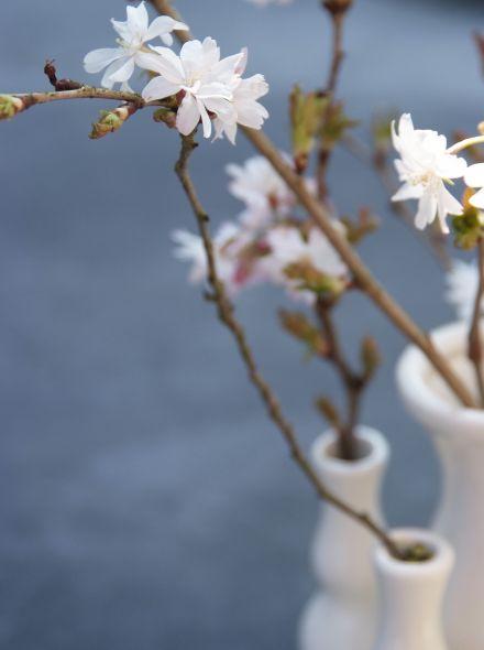 Prunus subhirtella 'Autumnalis' (Herfstbloeiende sierkers)