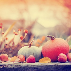 Tuintips voor november