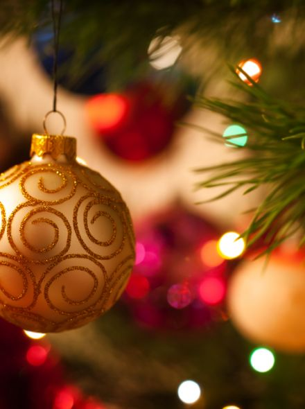 Picea abies (Fijnspar, kerstboom)