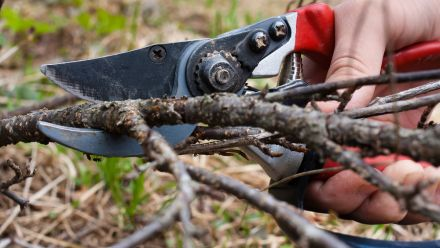 Tuincursussen (Tuinontwerp, beplantingsplan, Vijver, Workshops tuinieren)