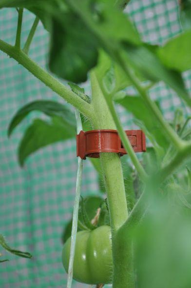 Tomatenclips (20 stuks)