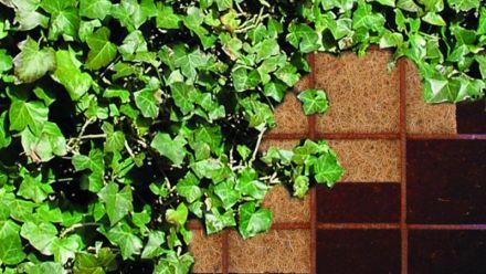 Greenwall (Geluidsreducerende groene schutting, geluidsscherm)