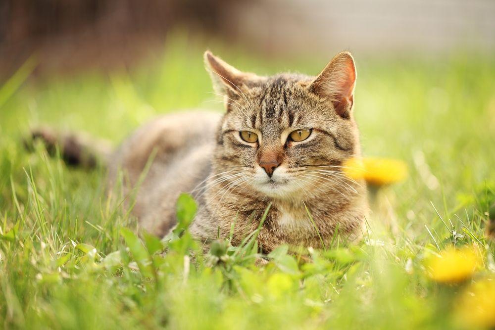 Kattenstront In Tuin : Wielrenner in botsing met kat nieuws op westlanders nu