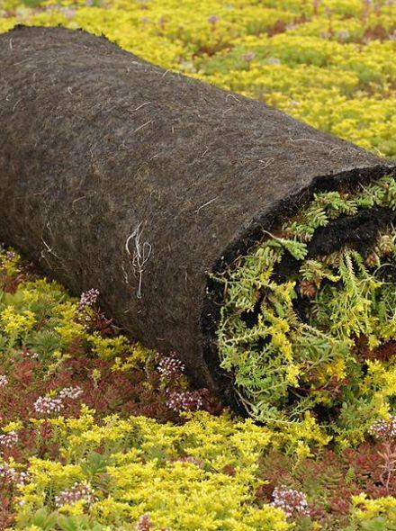 Sedumroll vetplantenmatten (Vegetatiemat, Sedumrol 1.10 x 2.0 meter) Techno Groendak Systeem