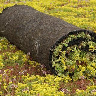 Sedumroll vetplantenmatten (Vegetatiemat, Sedumrol 1.10 x 2.0 meter) Simplex Groendak Systeem