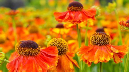 Tuinplanten (kopen, snoeien, onderhoud, bemesten)