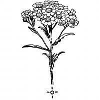 Cruydt-Hoeck Wildeplantenzaden