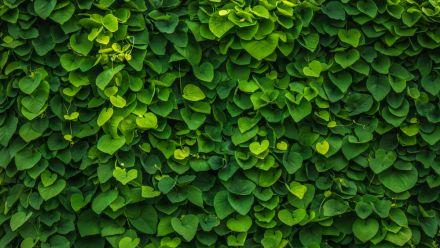 Groene wanden - Verticale tuin