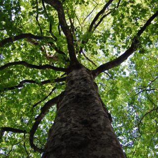 Groei onderzoek (groeiontwikkeling van bomen)
