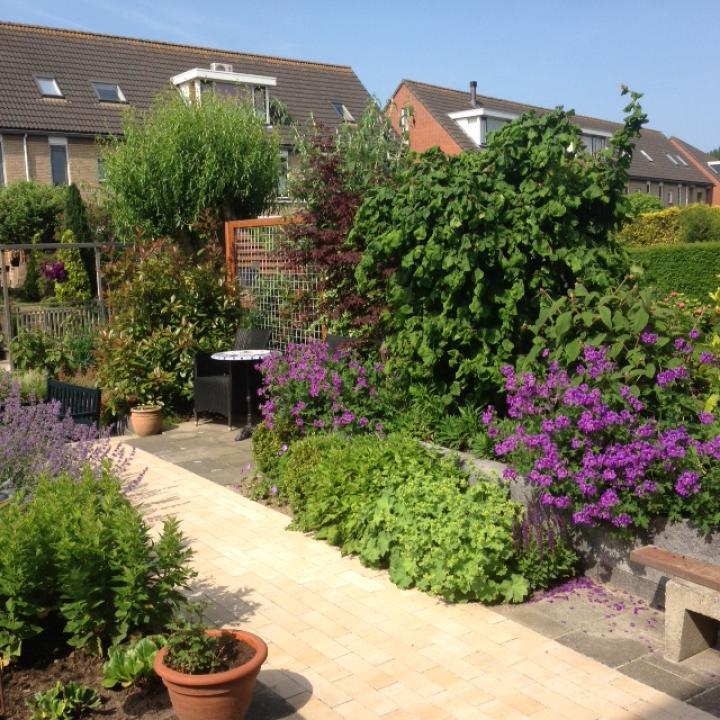 Kleine stadstuin in ridderkerk dutch quality gardens - Kleine stadstuin ...