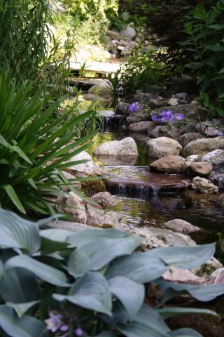 Grote natuurlijke tuin