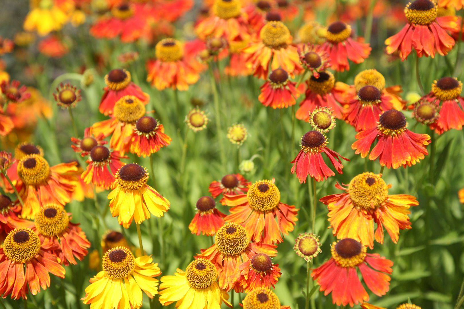 Citaten Over De Zomer : Uitspraken over tuingeluk tuingeluk