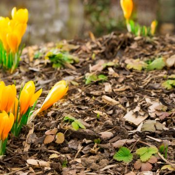 Kun je aan wilde planten zien wat de conditie van de grond is?
