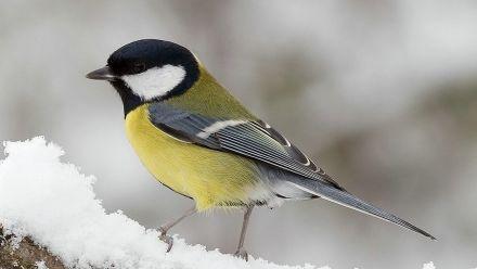 Tuinplanten voor vogels (Vogels lokken in de tuin)