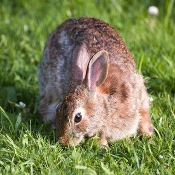 Met welke planten houd ik konijnen uit mijn tuin?