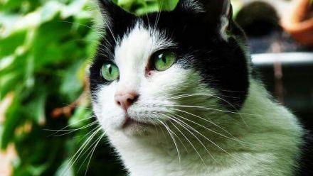 Tuinplanten tegen (het weren) katten en tuinplanten die katten aantrekken