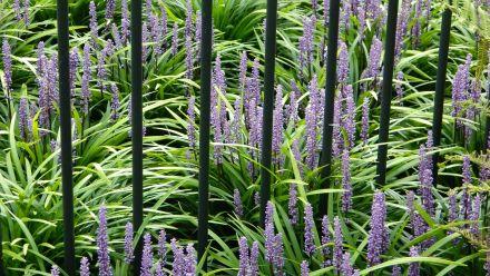 Onderhoudsvriendelijke tuinplanten (met tips voor de onderhoudsvriendelijke tuin)